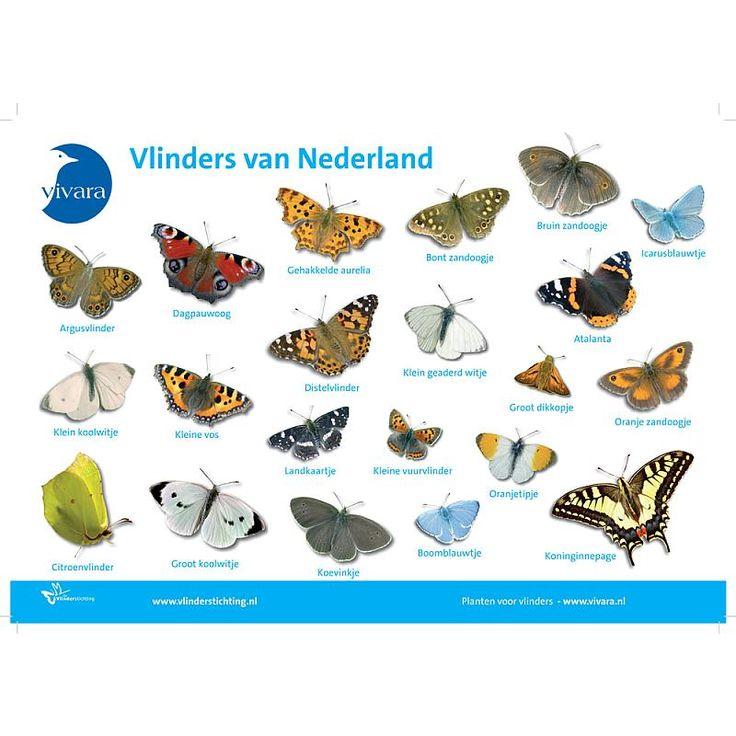 kleurrijke vlindersoorten - Google zoeken