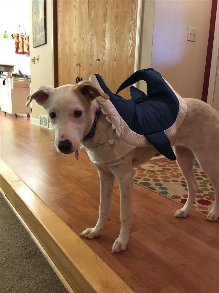 My baby in her shark Halloween costume😂😘