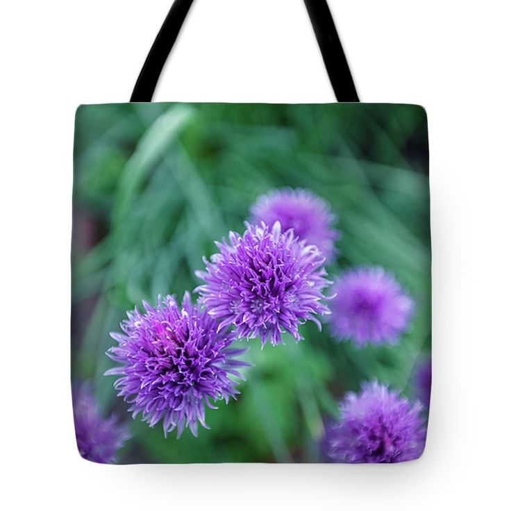 https://fineartamerica.com/…/1-garden-blue-flowers-echinops…