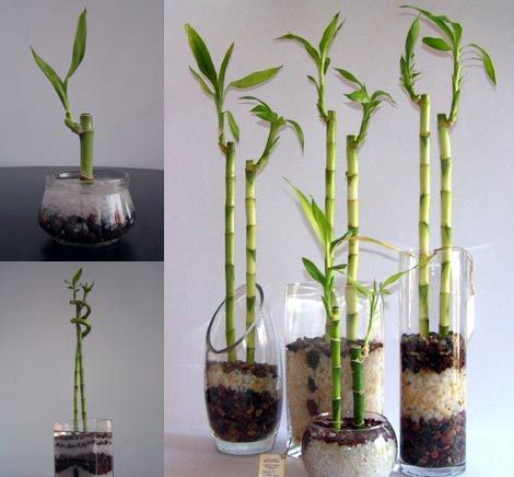 Decoracion Con Bambu Plantas Flores Y Jardin
