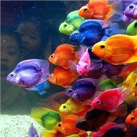 CoolPetZ | Social Pet Network Akvaryum Balığı Hastalıkları... #balık #akvaryum #CoolPetZ