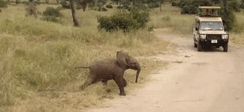 Tiny elephant//