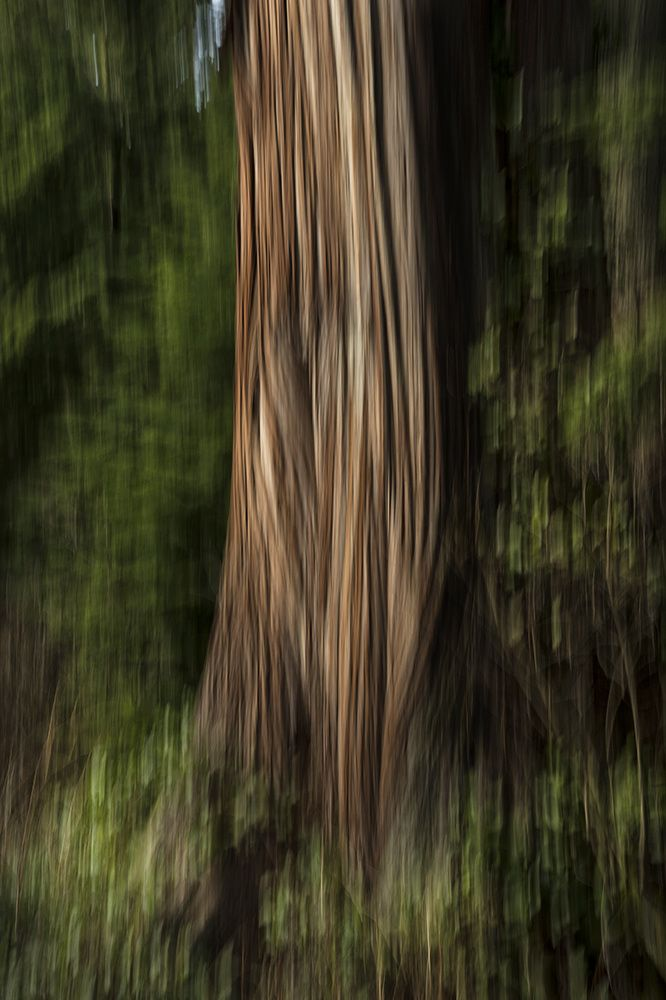"KIMBERLEY FRENCH: trunk, Stanley Park, 2014 Photograph on Wood with Resin,  Original 36˝ × 24˝  AP 21.5"" x 14.75"""