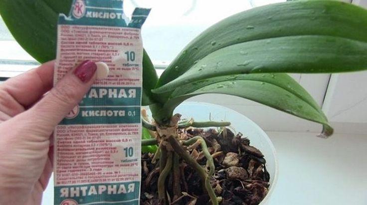 Польза янтарной кислоты для растений