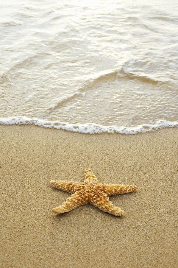 ~~Starfish On Beach ~ starfish sitting on sand in shallow of crystal clear rippling water by Mary Van de Ven~~