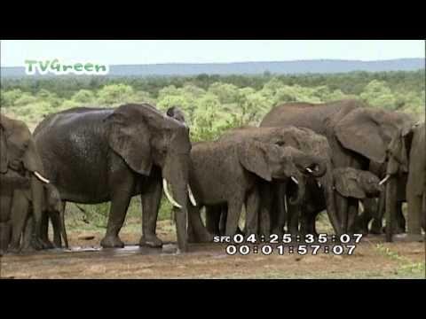 Wild Peers: South Africa - Zuid Afrika - YouTube