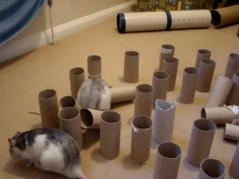 Great idea for entertaining rats!! I think I would hide treats in some of them.