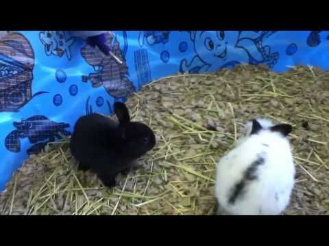 ▶ Animal Ark Pet Store, Orem UT - YouTube