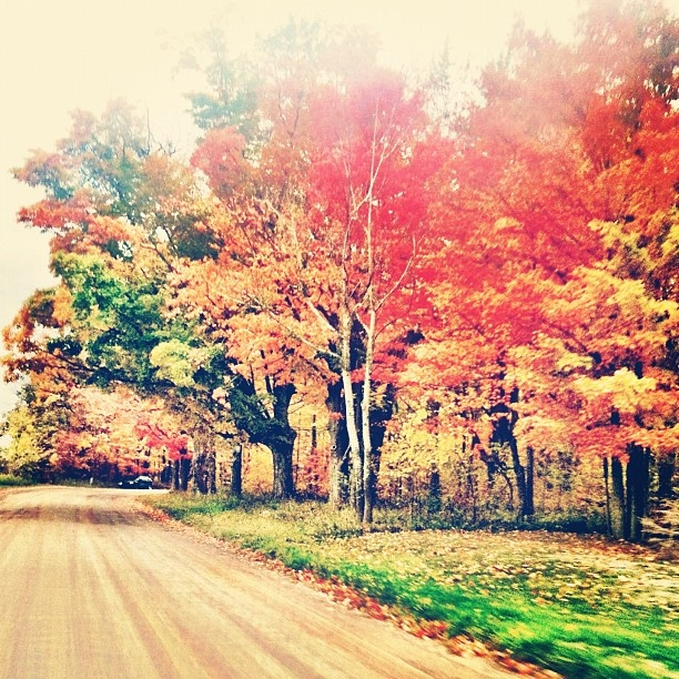 A gorgeous season,  Tall trees painted in fall warmth,  How I love Autumn.