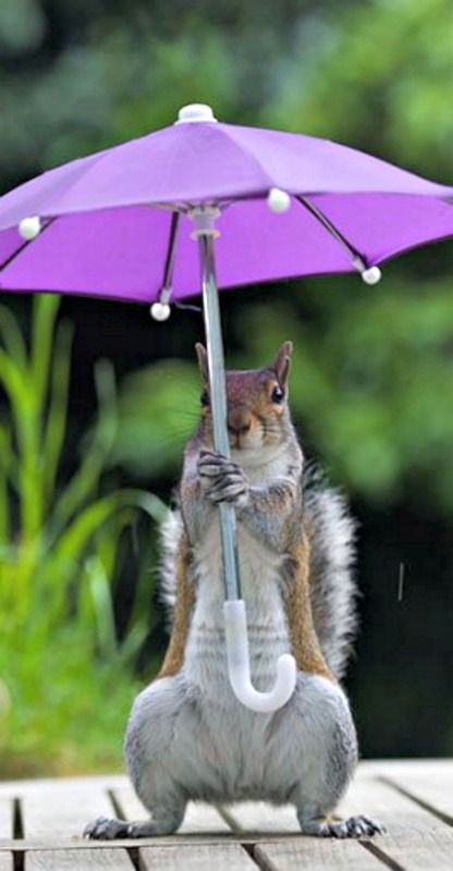 Mrs. Squirrel stays cool in the shade