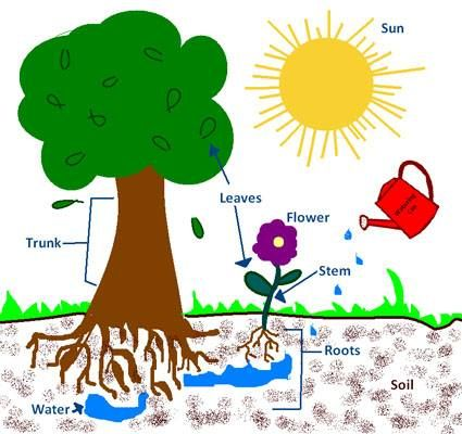 cycles in biology essay plan Shmoop biology explains the nitrogen cycle part of our ecology: organisms  and their environments learning guide learning and teaching resource for the .