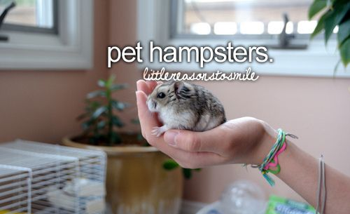 i love hampsters! but mine always died :(