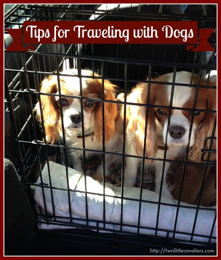 Tips for Traveling with Dogs - A must read before packing the car for the Holidays. #travel #dogs #Safety