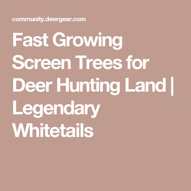 Fast Growing Screen Trees for Deer Hunting Land | Legendary Whitetails