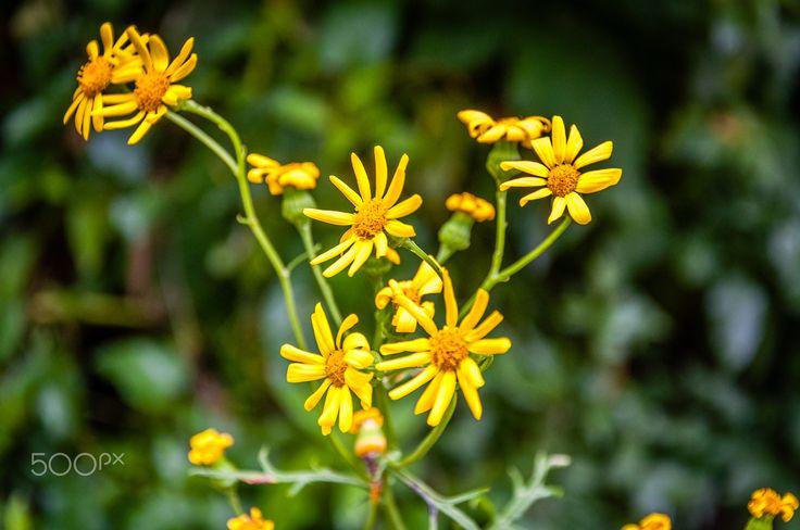 natural yellow - null
