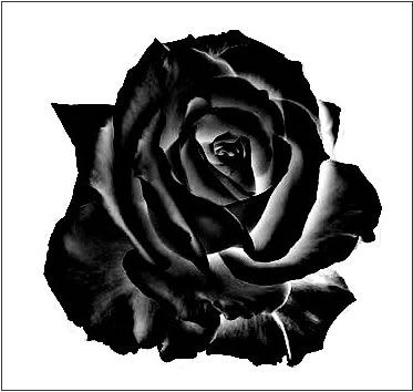 black rose drawing tattoo images. Black Bedroom Furniture Sets. Home Design Ideas