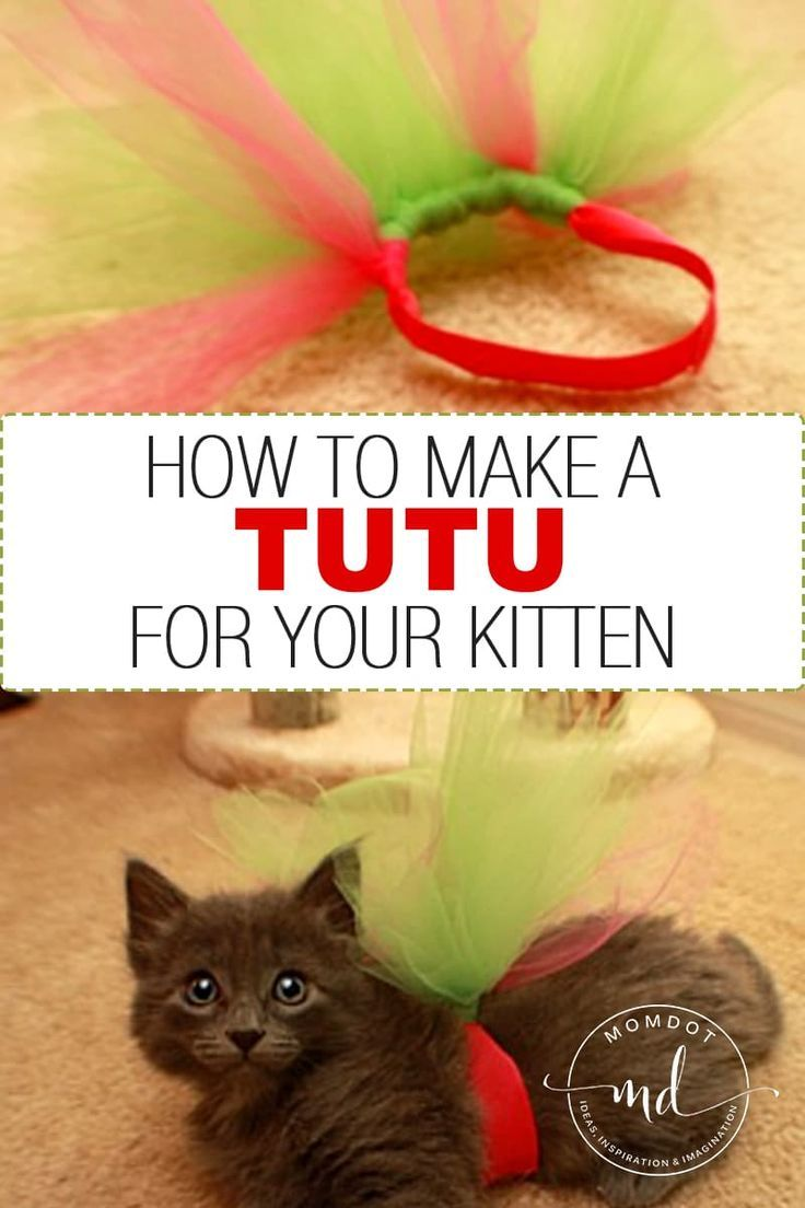How To Make A Tutu For Your Kitten How To Make Tutu How To Make Kitten