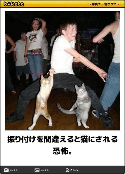 振り付けを間違えると猫にされる恐怖。
