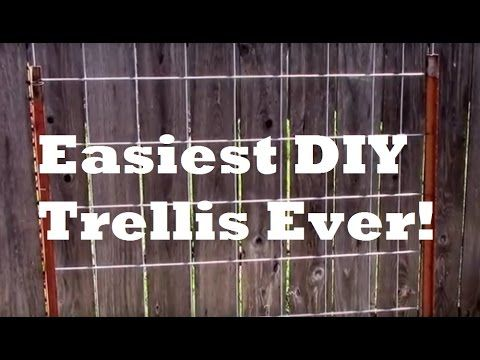 Cheap DIY Vertical Garden Trellis Goes up Fast. This is a must see video for those that want to save money, time and have a vertical grow panel that lasts. Please share this with other and re-pin so they can enjoy learn this simple system too! Happy Gardening/Farming Marty Ware (Australian Micro Farmer)