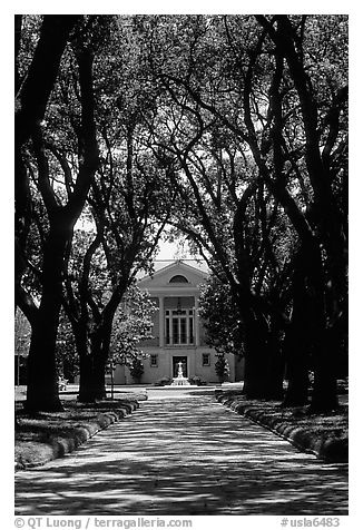 I absolutely love those long driveways leading up to old southern plantation houses