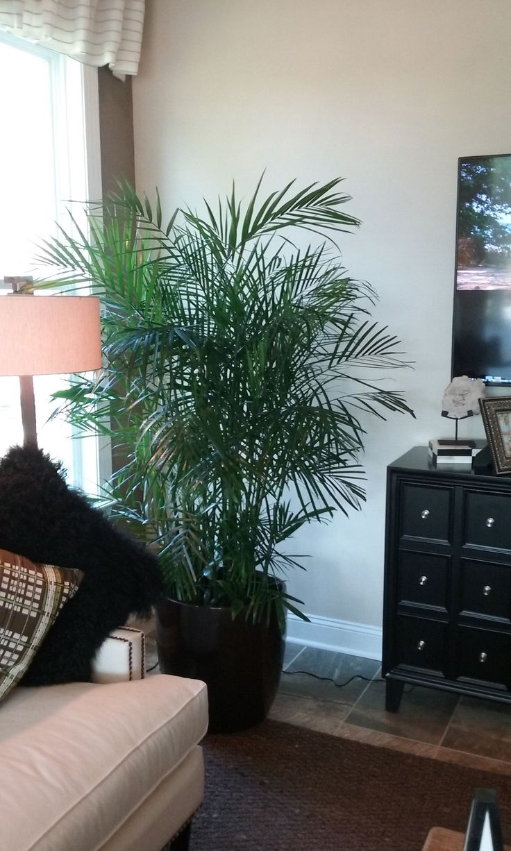 Palm Tree Decor For Living Room 25 Best Ideas About Palm Plants On Pinterest Palms Green