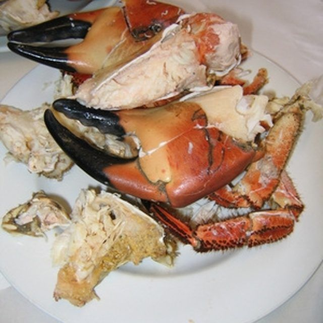 Stone crab claws are a delicacy, but harvesting them can take some practice.