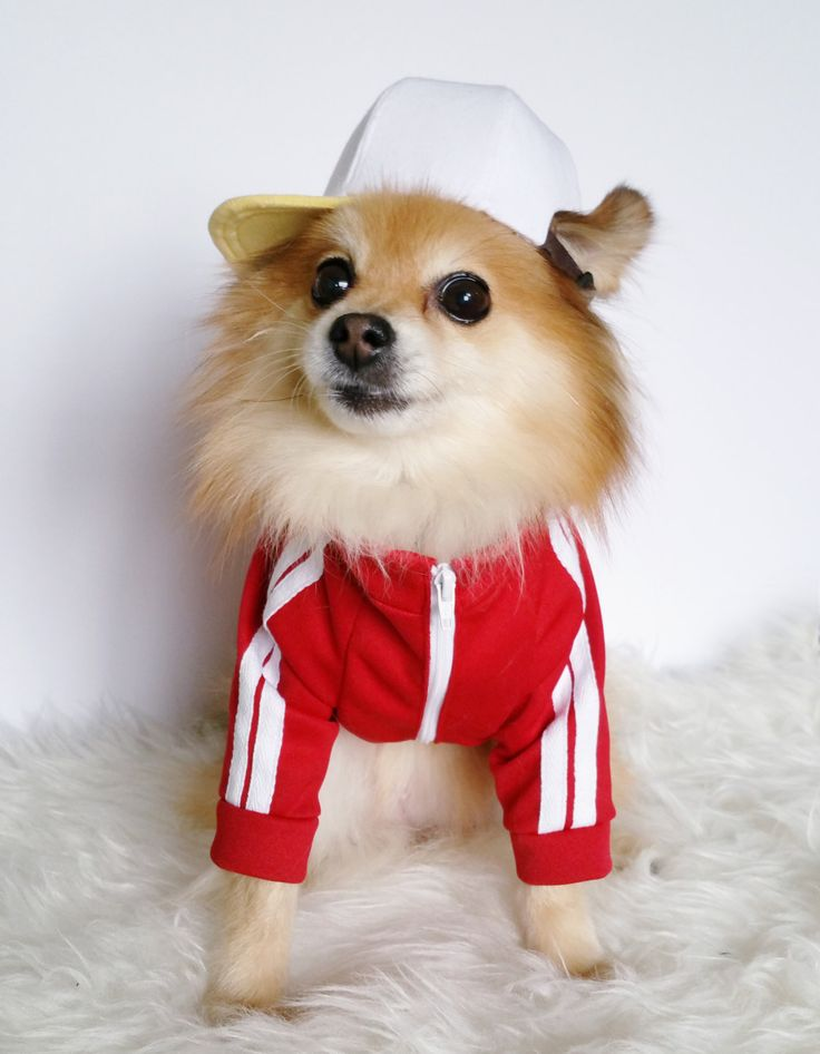 Red stripe dog jersey,dog clothes,puppy jacket,dogs hoodies,doggy hoodie,pet sports wear,small dogs jackets,dogs winter clothes,long sleeves by puppydoggyclothes on Etsy