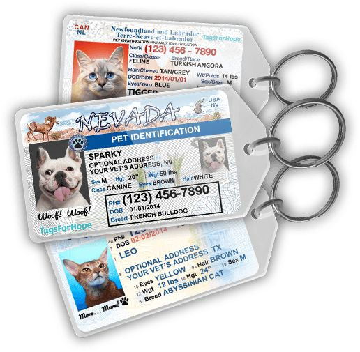 Pet ID Tags resembling little driver's licenses! So appropriate and cute!
