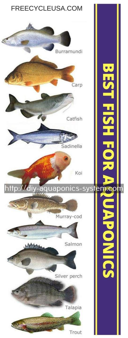 how to build an aquaponics system at home - aquaponics equipment for sale.diy aquaponics system 9902249147