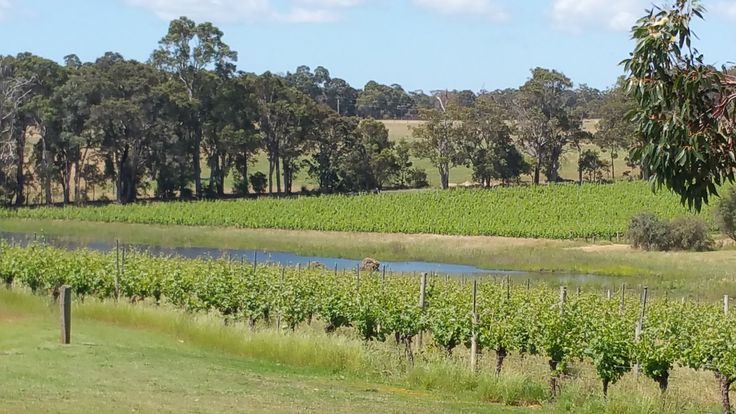 Hay Shed Hill Vineyard