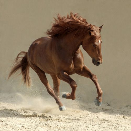 BEAUTY IN MOTION. ..Gorgeous Horse