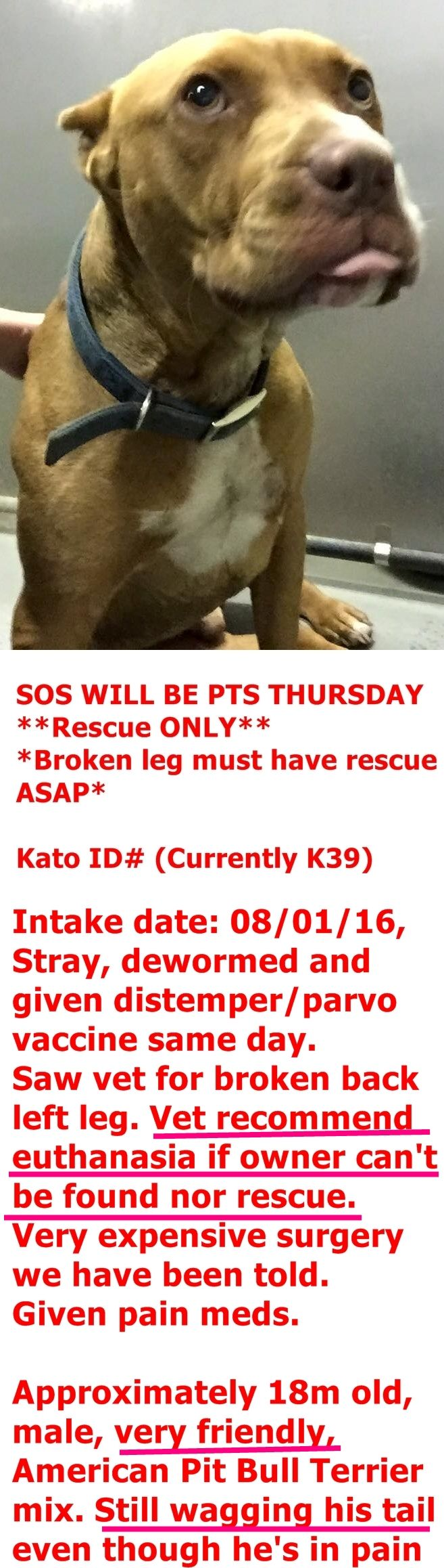 Kato ID# (Currently K39) Columbus county animal shelter: Whiteville nc DogsofccacVolunteers@yahoo.com https://www.facebook.com/ccacdogs/photos/a.993638314028225.1073741883.258289547563109/1126109474114441/?type=3&theater
