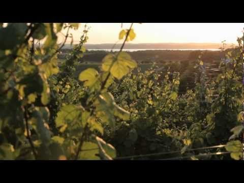 Wineries | A Pure Michigan Summer