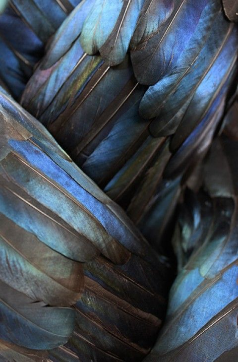 ♥ Kate MccGwire – LURE @ All Visual Arts (London) - magpie feathers
