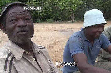 Watch This Cocoa Farmer's Joy As He Tastes Chocolate For The First Time