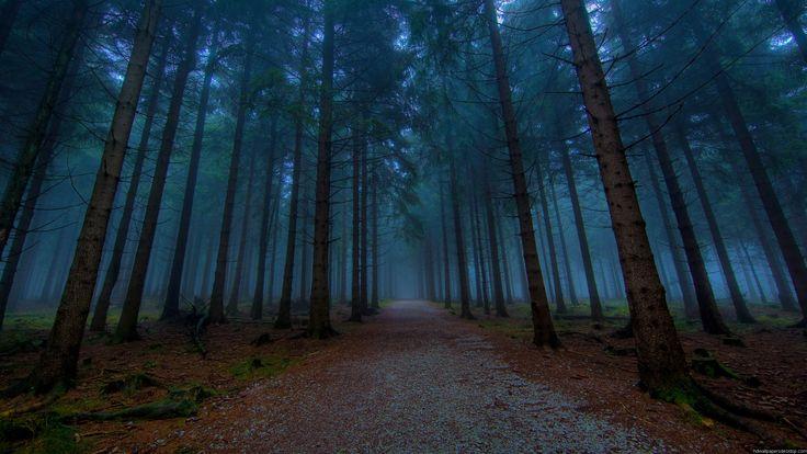 fotografias de bosques | 2560x1440 Wallpapers, HD, Widescreen, Computer Desktop Wallpapers ...