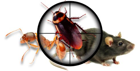 AGNI Pest Control Chennai We are provides effective and pest control service in Chennai since 1992. AGNI pest control is one of the professional Pest Control Chennai, established with a vision of providing cost effective pest control treatment services.
