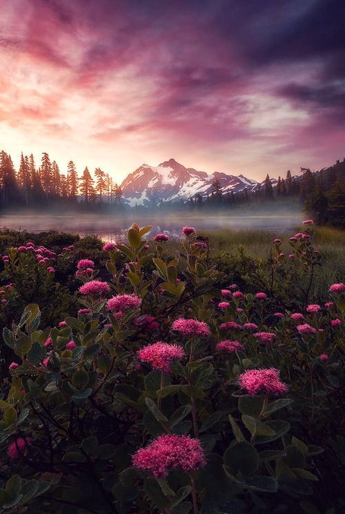 Purple Haze, Mount Shuksan, Washington (The Best Travel Photos)