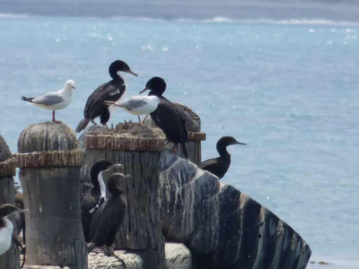 Sea Gossip
