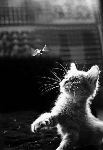 chat (Dkduchat) Twitter Cats, Cute animals, Kittens