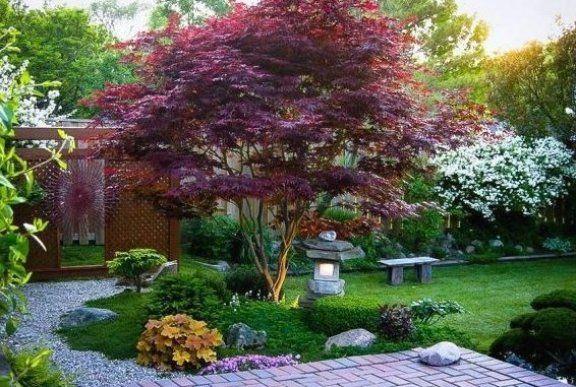 Japanischer Ahorn Eine M Rchenhafte Erg Nzung Jeder Gartenlandschaft Ahorn Eine Er Japanese Maple Tree Bloodgood Japanese Maple Pruning Japanese Maples