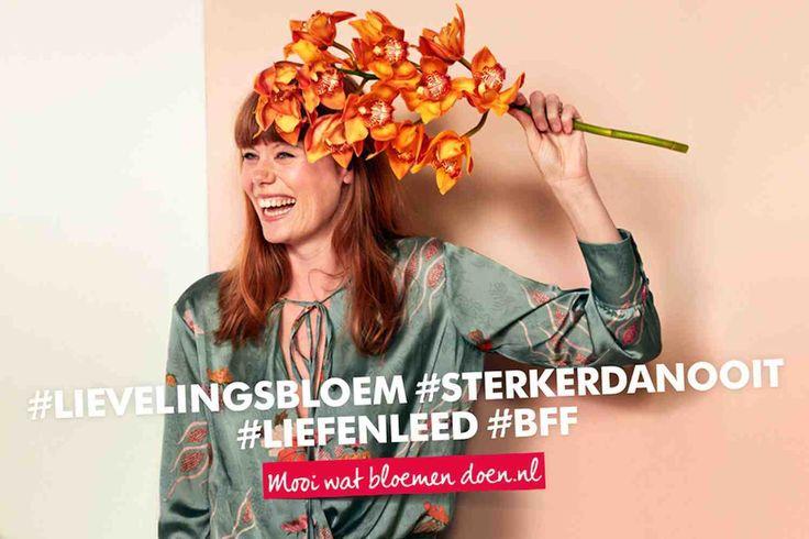 HONSELERSDIJK -De Lievelingsbloem-campagne komt terug. Bloemenbureau Holland rolt de campagnekomend najaar opnieuw uit in Nederland en het Verenigd Koninkrijk en voor het eerst ook in Frankrijk en Duitsland.    Lievelingsbloem  Iemands favoriete bloem, dat noemen wij een lievelingsbloem. Een speciaal cadeau dat