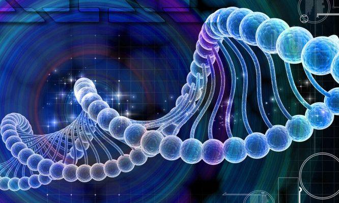 Τα γονίδια καθορίζουν ακόμα και το πόσο θα σπουδάσουμε   Το πόσα χρόνια θα σπουδάσει ένας άνθρωπος στις διάφορες βαθμίδες της εκπαίδευσης εξαρτάται σε ένα μικρό βαθμό και από τα γονίδιά του σύμφωνα με μια νέα διεθνή επιστημονική έρευνα τη μεγαλύτερη έως σήμερα γενετική μελέτη στο πεδίο των κοινωνικών επιστημών. Στη μελέτη συμμετείχαν και τέσσερις ελληνικής καταγωγής επιστήμονες δύο με έδρα την Ελλάδα και δύο τη Βρετανία.   Οι επιστήμονες από διάφορες ευρωπαϊκές και άλλες χώρες με επικεφαλής…