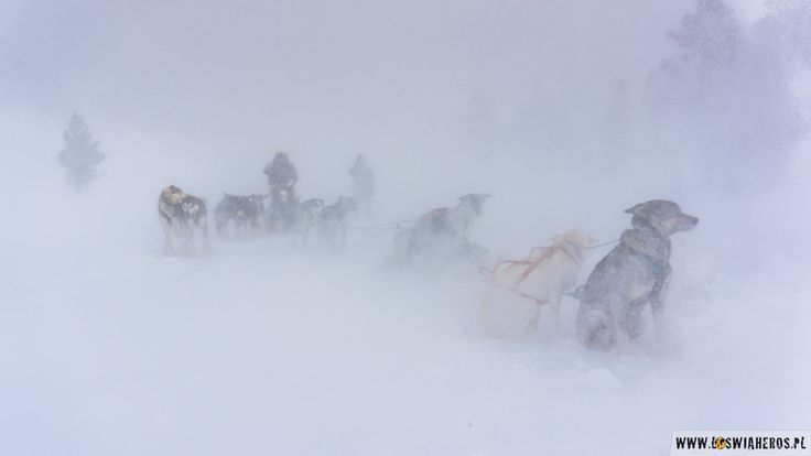 Dog sleigh rides in norwegian village of Geilo during snow hurricane! That was really awesome to see!