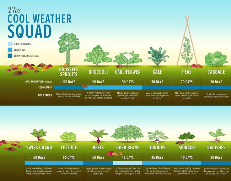 Cool weather crops - great visual!