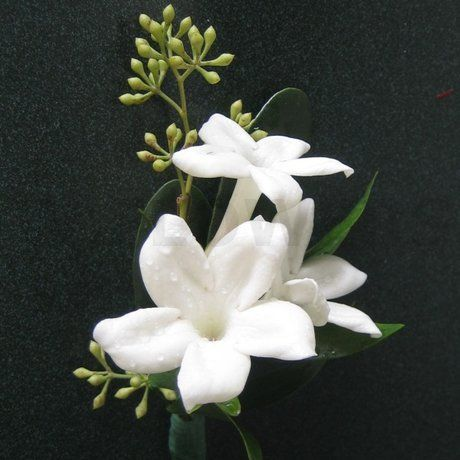 Stephanotis!  wedding flowers...
