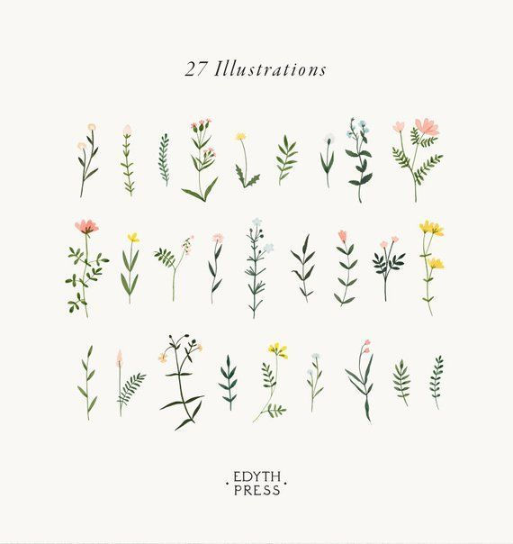 Botanical Clipart Wildflower Hand Drawn Floral Wat…