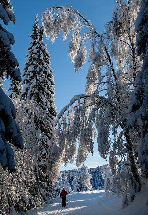 Vinterportaler