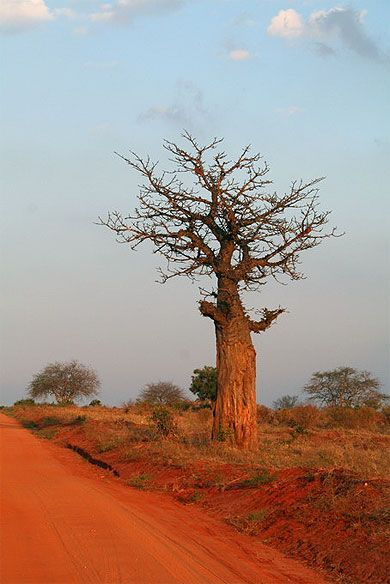 Red dirt roads of Kenya, Africa.