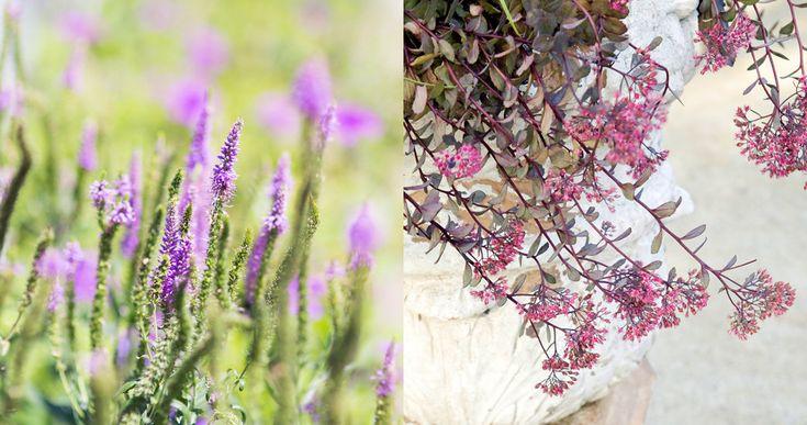 Plantas con flores resistentes a la sequía